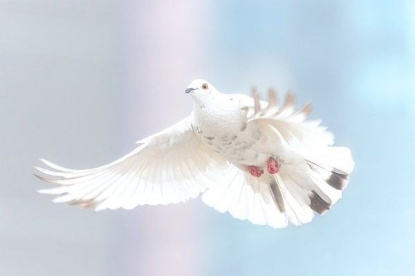 holy spirit in your life