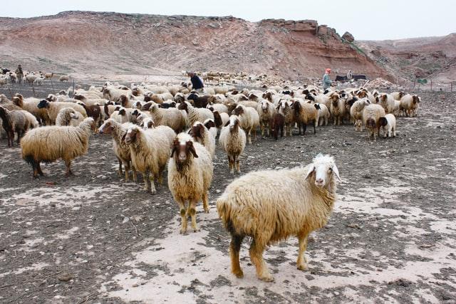 The Good Shepherd and servant leadership